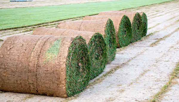 large-rolls-of-sod-for-sale